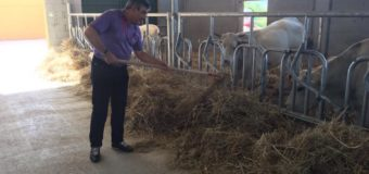 D'Alfonso, porca vacca