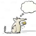 Il topo che va a scuola